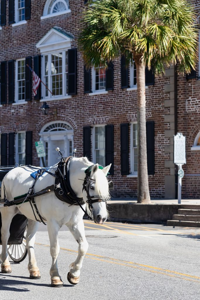horse-guided-tour-in-historical-downtown-charleston